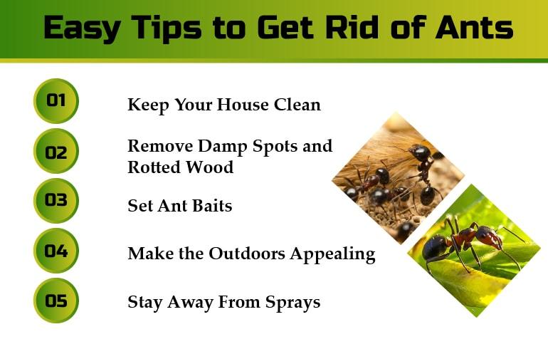Ant Pest Control Service