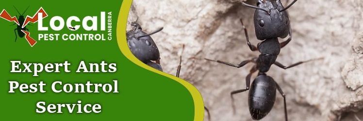 Tips to Getting Rid of Ants from your Home