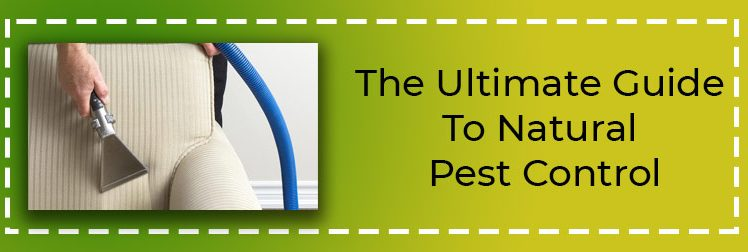 The Ultimate Guide to Natural Pest Control