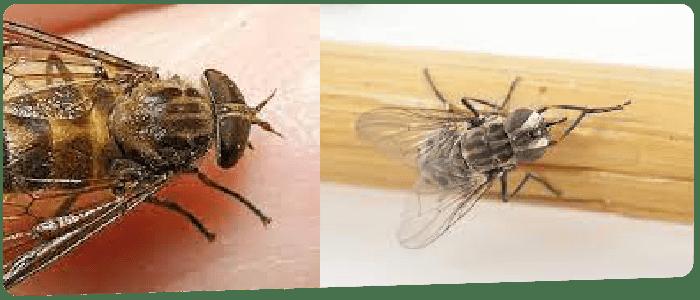 Flies Control Canberra